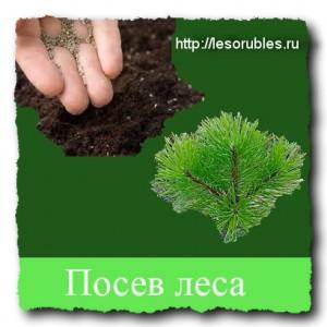 Посев леса